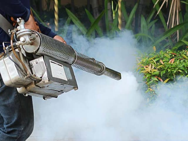 Why Pest Control Services Are A True Necessity
